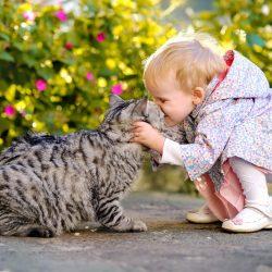 Toxoplazmózis – Maradhat a cica?